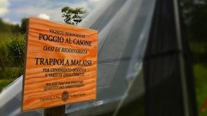 img: Combat in the vineyards | Castellani Spa | castelwine.com